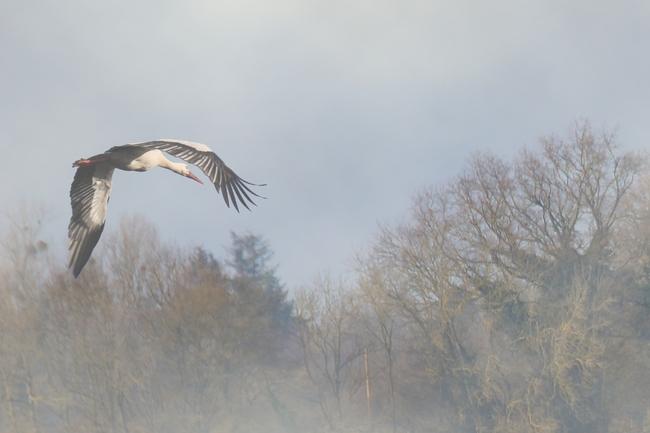 Brume matinale dans les Dombes