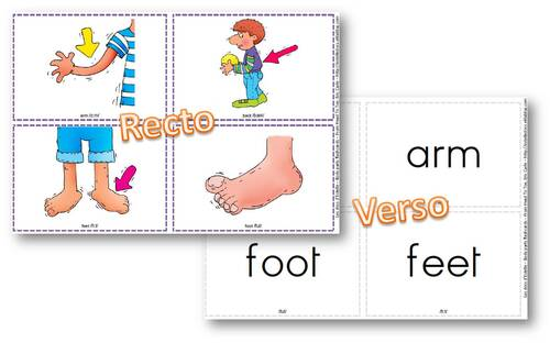 Flashcards Bodyparts pour l'album From Head to Toe de Eric Carle
