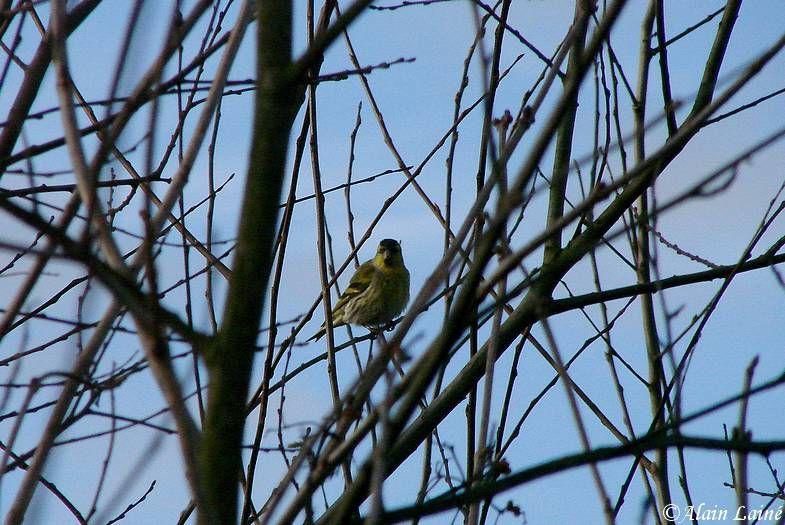 Oiseau_13Janv09_2