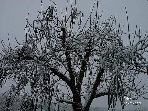 neige-20-janv-2013--13-.jpg