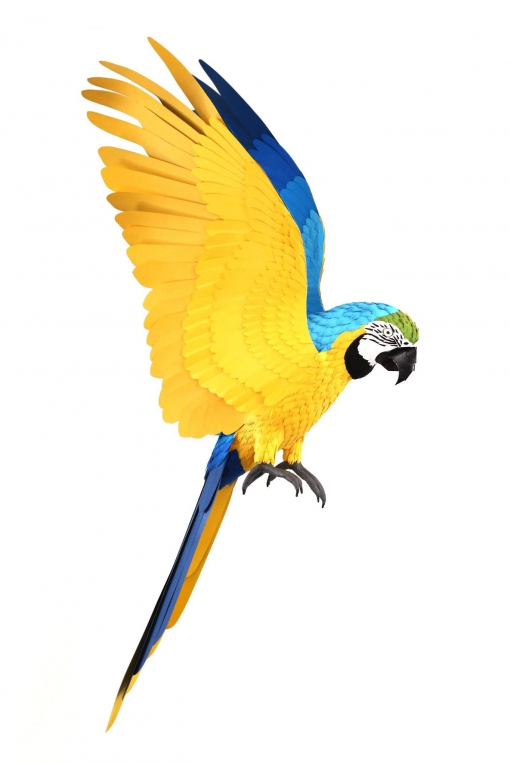 Diana Beltran Herrera-birds-paper-numerik6-1.jpg