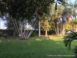 Suriname / Fin de la visite Paramaribo