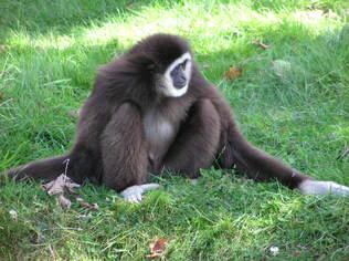"""Faites vous """"alpaguer"""", au zoo de Branféré (Morbihan)"""