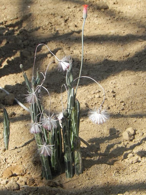 Cactuseraie de Creisméas
