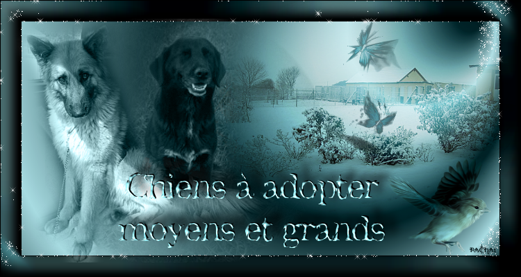 Chiens à adopter - Moyens et Grands