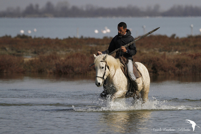 L'Equitation Camargue