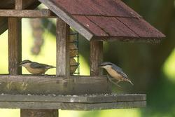 Coup de pouce aux oiseaux pendant la période hivernale
