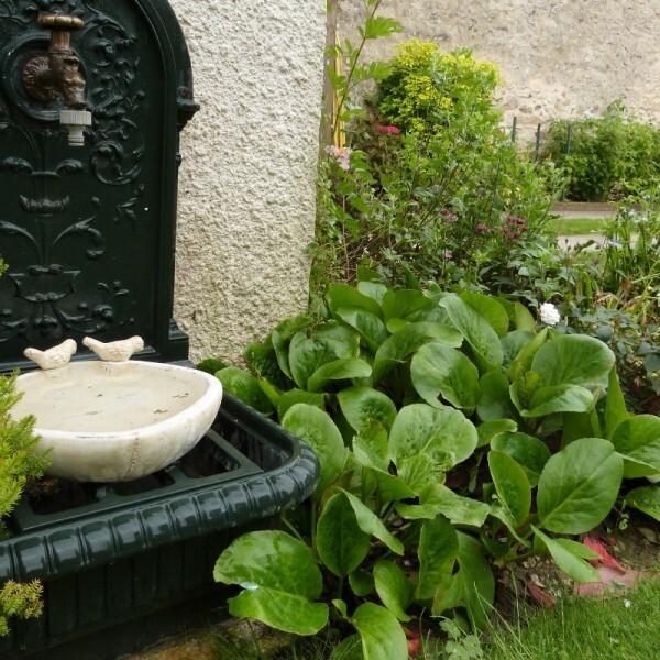 massif-de-la-potence---fontaine-et-bergenias--800x800-.jpg