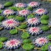 Par-terre fleuri (Fée Pirouette)