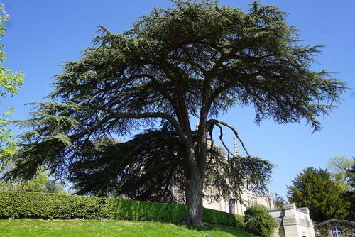Le parc de la Chapelle Royale - Dreux