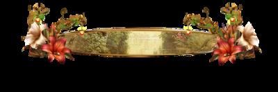 Kit de Domi 66 (Célysia)