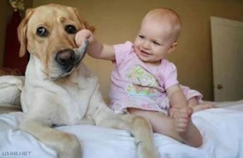 Les chiens qui protègent les enfants.(Série 2 de 4 articles.)