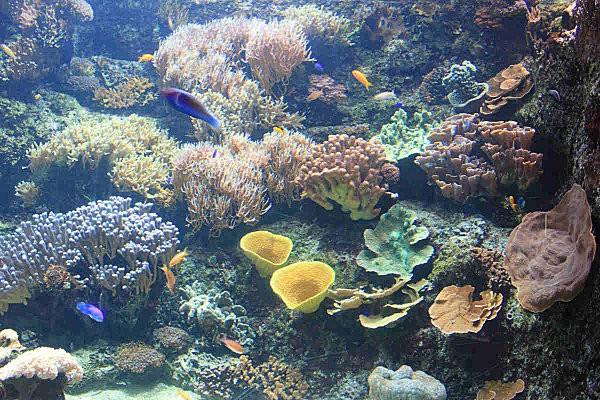 aquarium La Rochelle(3)