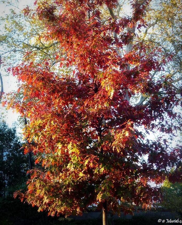 Couleurs d'automne à PAU