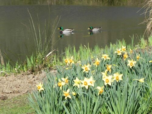 Printemps au Parc Botanique  de Brest