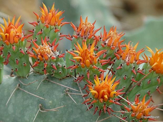 cactusavril 2010 422 (6)