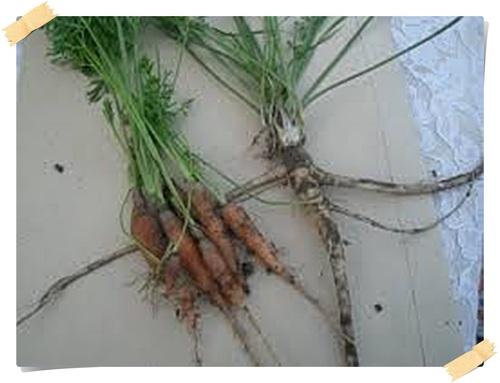 Les plantes commestibles en foret