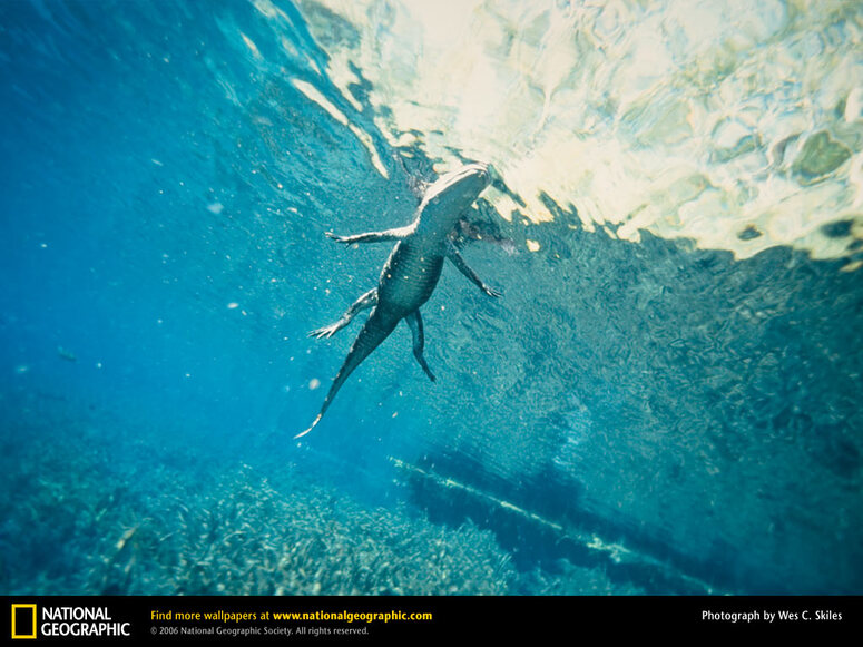 10 Images de la National Geographic 2