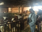 Première rencontre avec un veau, il s'apelle Mambo et est né il y a moins d'un mois.
