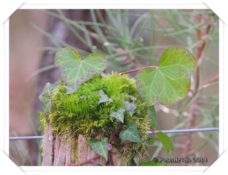 Balade en forêt - 1/8