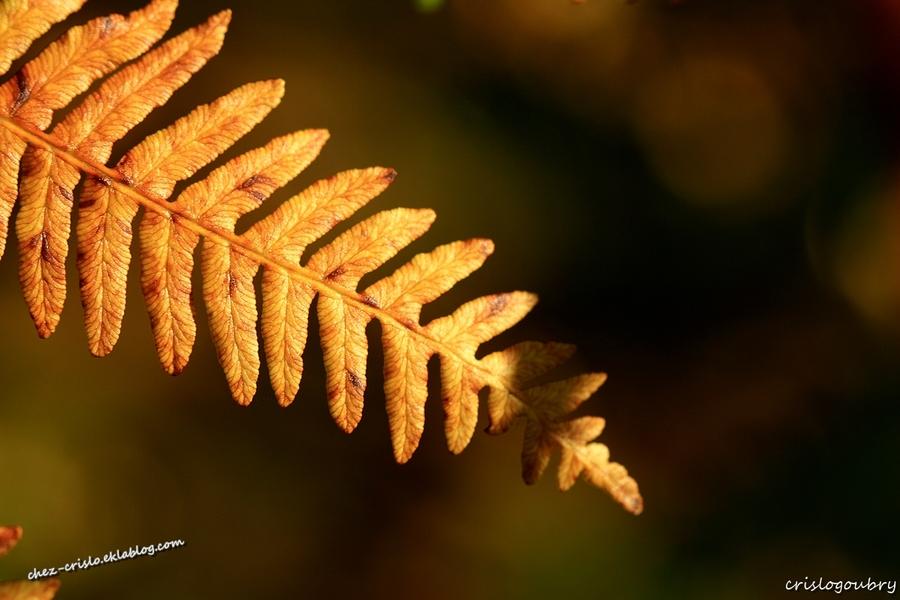 fouillis  d'automne