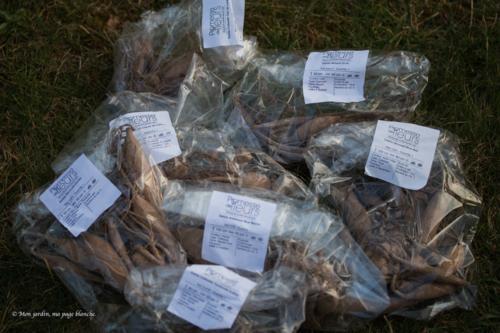 Promesses de fleurs : razzia sur les dahlias - livraison
