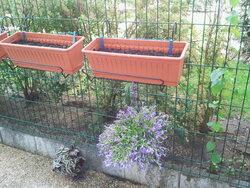 Les chroniques de ma terrasse: nouvelles venues