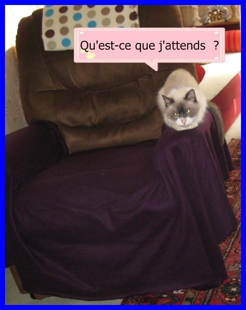 BIANCA-sur-le-FAUTEUIL-004c.JPG