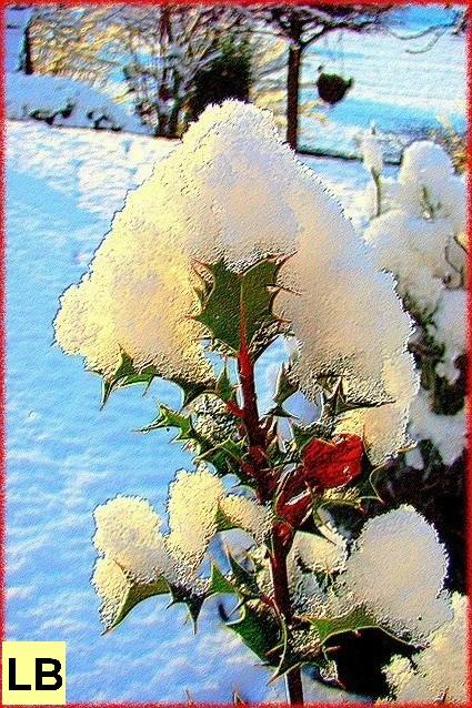 photos>hiver