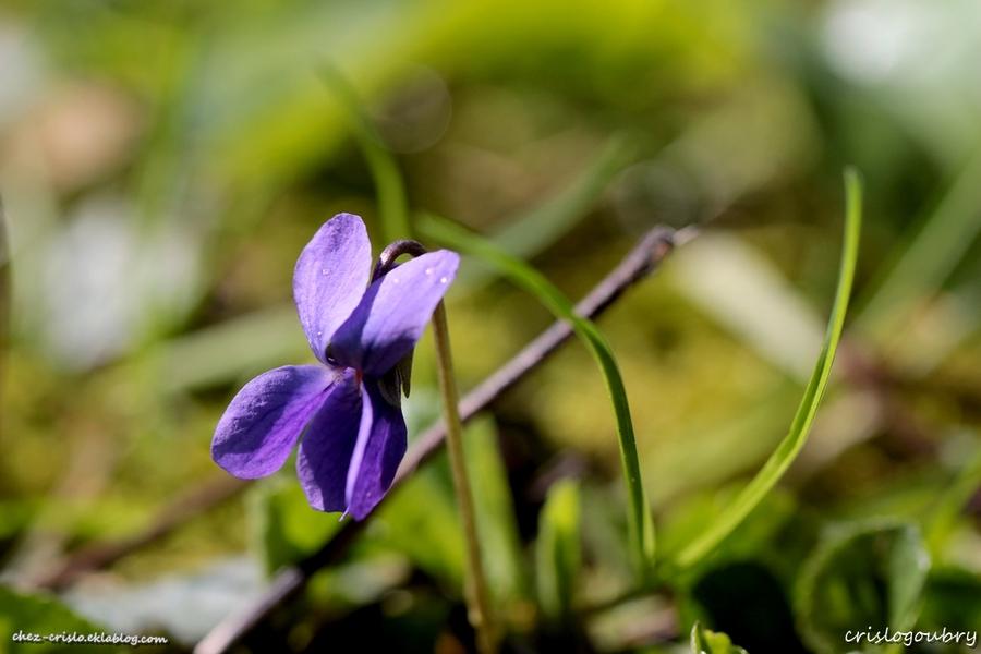 Quand le printemps revient (2)