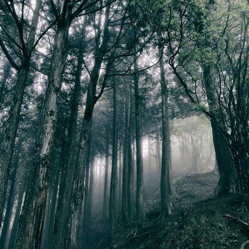 Akira Kosemura - In the Dark Woods (2017) [Instrumental Ambient]