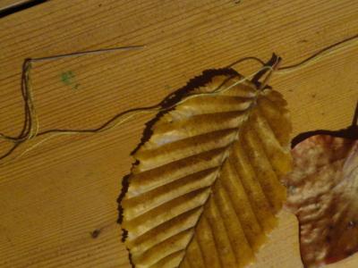 Blog de melimelodesptitsblanpain : Méli Mélo des p'tits Blanpain!, Guirlande de feuilles à la cire d'abeille! ;o)