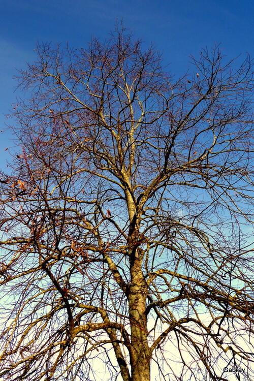 Ciel et arbres en décembre