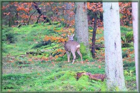 En Forêt ! (2)