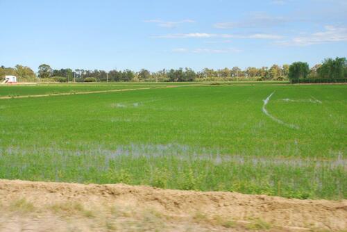 Parfois des rizières à perte de vue