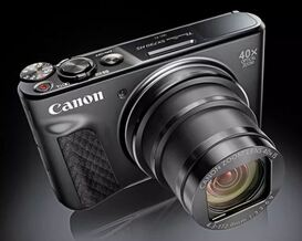 Goélands leucophées adultes et juvéniles (avec Compact Canon Powershot SX730 HS)