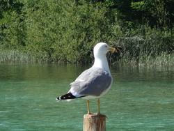 - Les lacs de Plitvice.