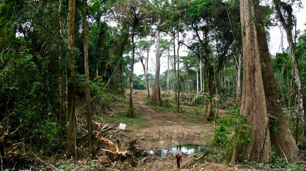 Une bande de forêt doit être rasée pour la construction d'une autoroute