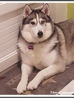 Mylka (4,5 ans)