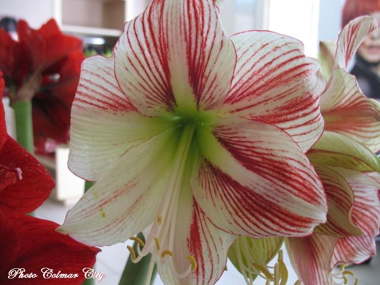 Des fleurs chez le coiffeur 38