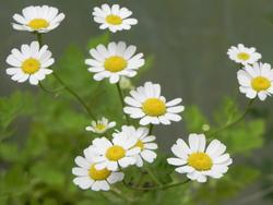 Association Légumes & Fleurs