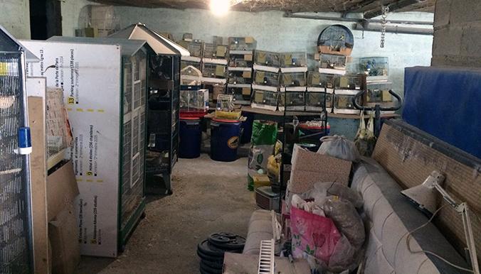 Plusieurs centaines d'oiseaux retrouvés enfermés dans un garage à Saint-Denis (93)