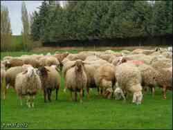 (J33) Villalcazar de Sirga / Boadilla del Camino 7 mai 2012 (3)