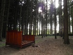 Lit en sapin dans la forêt de sapins
