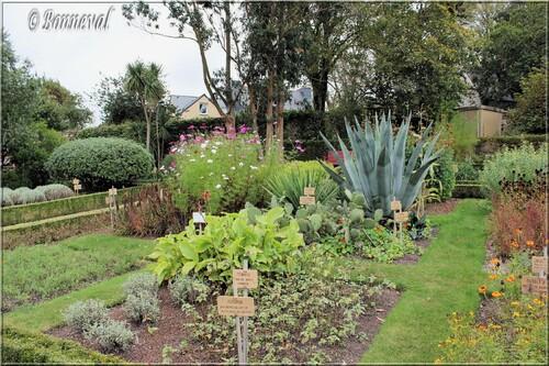 Abbaye de Daoulas Fijnistère plantes exotiques et fleurs dans le jardin