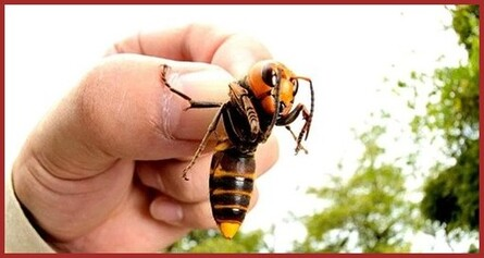 Insectes / arachnidée  (1)