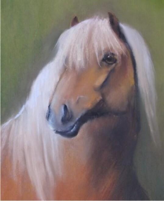 tête de cheval redimensionner