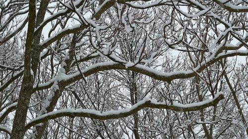 singes signes neiges