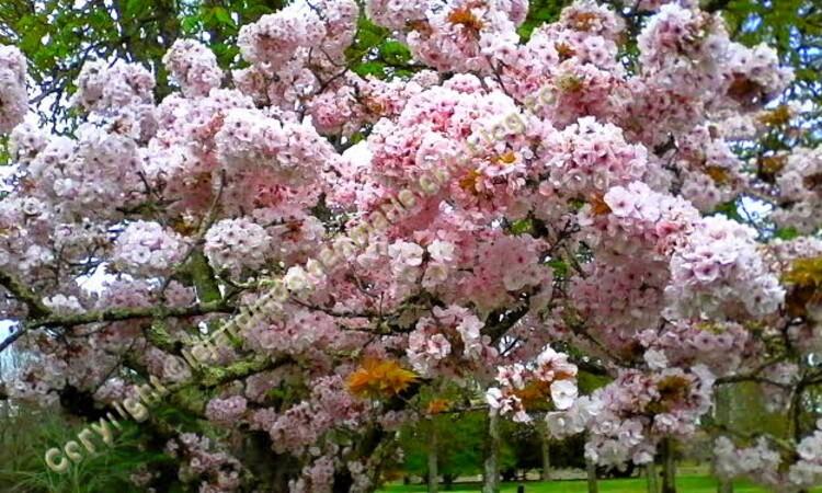 Sous de beau nuage printanier du printemps, très chaud de la nuit,les couleurs dans la nature change et ces belles couleurs fond chaud au Sous de beau nuage printanier du printemps, très chaud au cœur