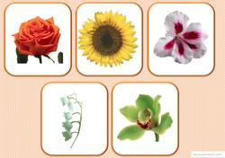 Loto des fleurs